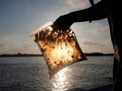 آیین نامه جلوگیری از آلودگی آب