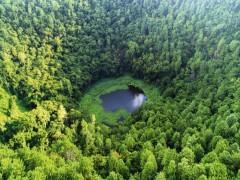 قانون ملی شدن جنگل های کشور