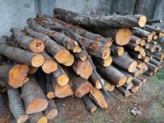 قانون حفاظت و بهره برداری از جنگل ها و مراتع