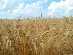 دستور العمل اصلاحی ضوابط واگذاری اراضی منابع ملی و دولتی برای طرح های کشاورزی و غیر کشاورزی